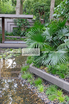 Contemporary garden, Exotic garden, Palm tree, Pebble, Tropical garden, Water garden,