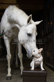 horse sniffing small puppy