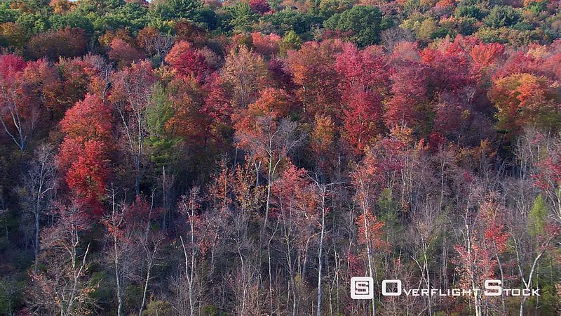 Slow flight over trees in blazing red foliage