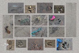 Tracks in the Sand at Presque Isle - Collage
