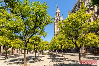 Spain, Andalusia, Seville. Patio de los Naranjos in the cathedral and Giralda tower