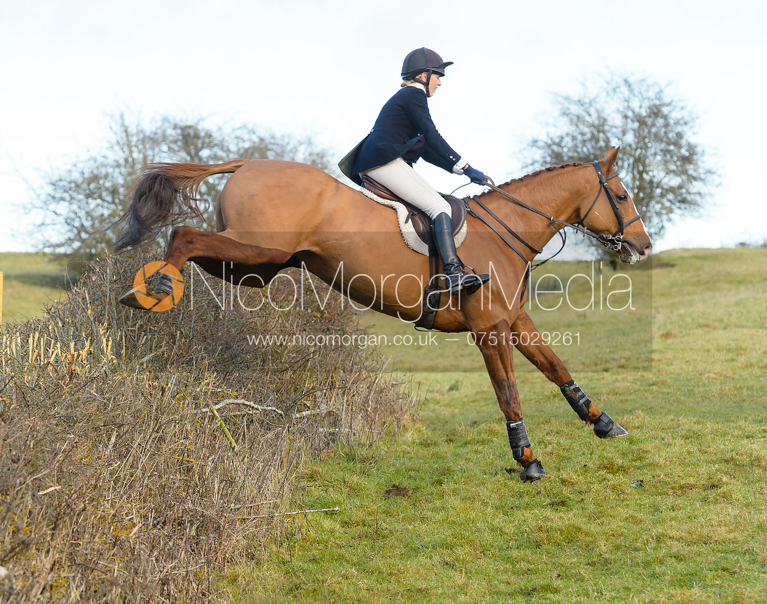 Katie Barber jumping an hedge at Barsby - The Quorn at Barrowcliffe Farm