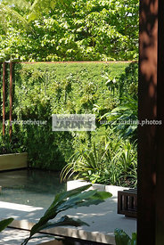 Exotic garden, Tropical garden, Foliage wall, Green wall, Vegetation wall