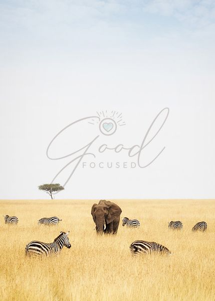 Zebra and Elephants in Kenya - Vertical
