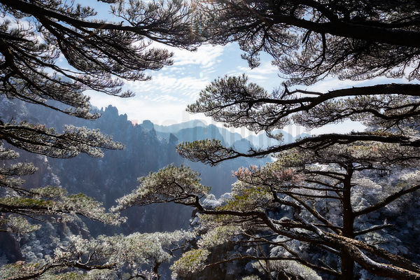 The Grand Canyon of the Huangshan Mountains Framed through Huangshan Pines