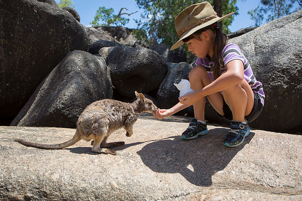 Misa, 8 ans nourrit un Mareeba Rock-Wallaby (Petrogale mareeba) sauvage, Plateau d'Atherton, Queensland, Australie / Misa, 8 years-old give food to a wild Mareeba Rock Wallaby on rock,  Atherton Tableland, Queensland Australia un Mareeba Rock-Wallaby (Petrogale mareeba) sauvage, Plateau d'Atherton, Queensland, Australie / Misa, 8 years-old touch a wild Mareeba Rock Wallaby on rock,  Atherton Tableland, Queensland Australia