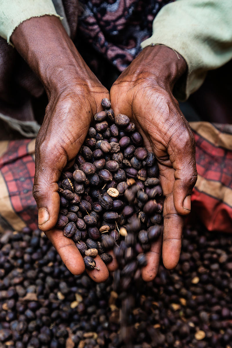 Coffee Beans in Woman's Hands