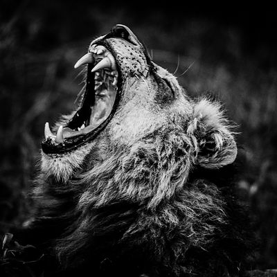 1841-Lion_Laurent_Baheux