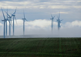 Green wheat and wind towers 2
