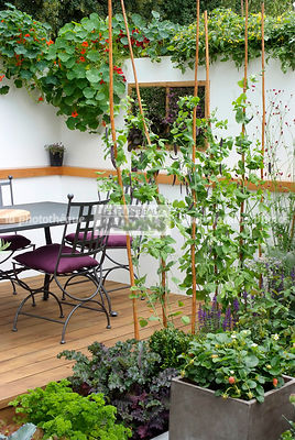 Allotment, Container, Contemporary garden, Garden chair, garden designer, Garden furniture, Garden table, mangetout, Mini potager, Mini Vegetable garden, Pot, Small garden, Tropaeolum majus, Urban garden, Vegetable patch, Vegetable plot, Pot, Wooden Terrac