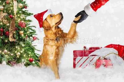 Dog Meeting Santa Claus at Christmas
