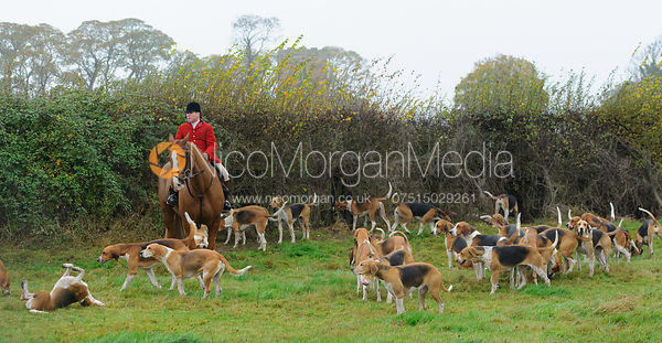 Huntsman John Holliday and the Belvoir Hounds