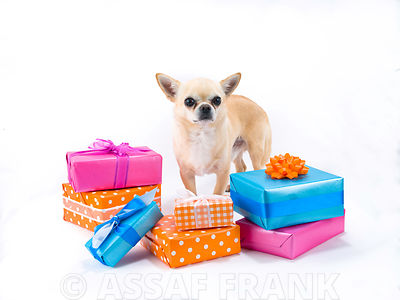 Dog with gift boxes