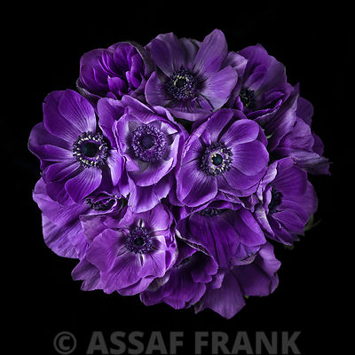 Anemone flower bouquet