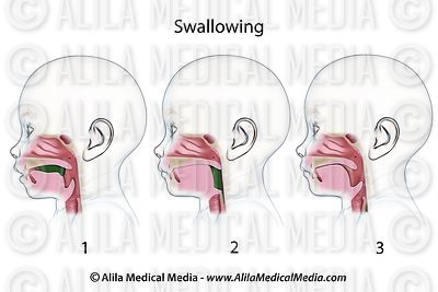 Swallowing (baby) unlabeled