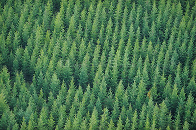Aerial view of a Norway spruce (Picea abies) plantation, Uppland, Sweden, September 2008