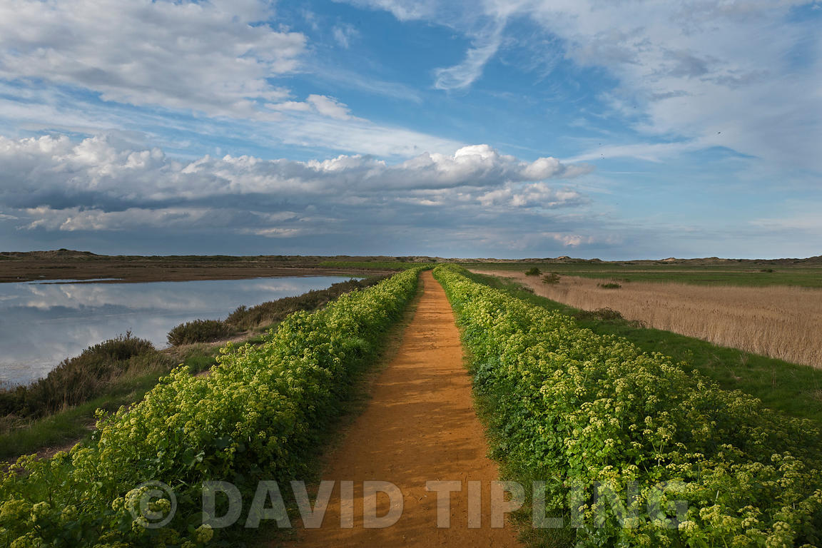 Norfolk Coast Path along sea wall from Burnham Deepdale out to  Gun Hill, Holkham National Nature Reserve, North Norfolk