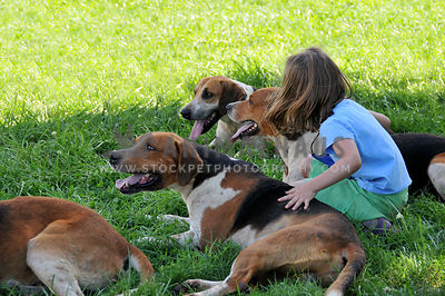 young girl petting several hounds