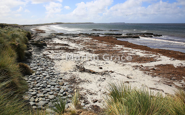 Beach at Elephant Corner, Sea Lion Island, Falkland Islands