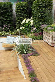 Aromatic plant, Border, Border with flowers, garden designer, Perennial, Small garden, Terrace, Thyme, Urban garden, Contempo...
