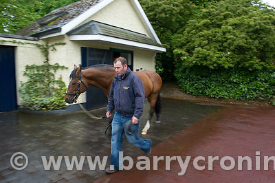 CoolmoreStud-12