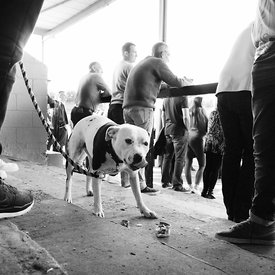 Albion Rovers..Cliftonhill Stadium, Coatbridge..27.8.16.Albion 0-4 Alloa.The dog on the pitch is called Ruby and her owner is...