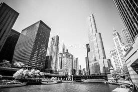 Black and White Picture of Downtown Chicago