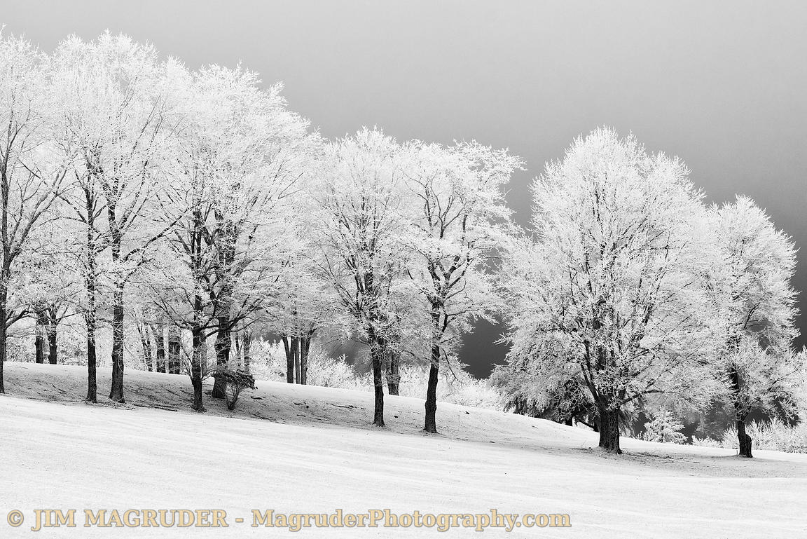 Trees Dressed in White