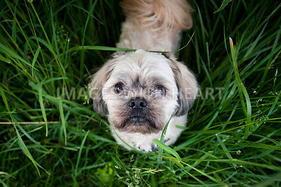 Small dog looking up in tall grass