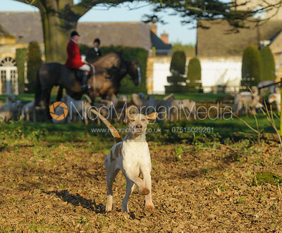 Cottesmore hounds at the meet at Pickwell Manor - The Cottesmore Hunt at Pickwell Manor 28/12