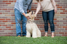 caucasian couple petting labradoodle dog outdoors