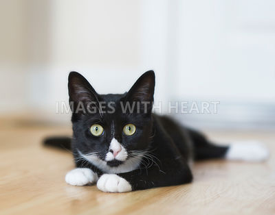 Cat lying on floor looking at camera