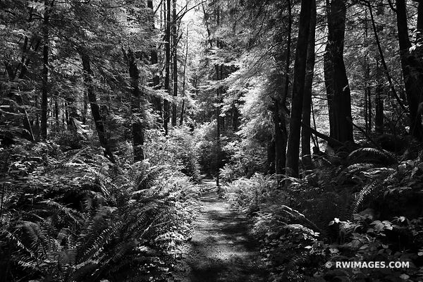 SHI SHI BEACH TRAIL PACIFIC NORTHWEST FOREST OLYMPIC NATIONAL PARK WASHINGTON BLACK AND WHITE