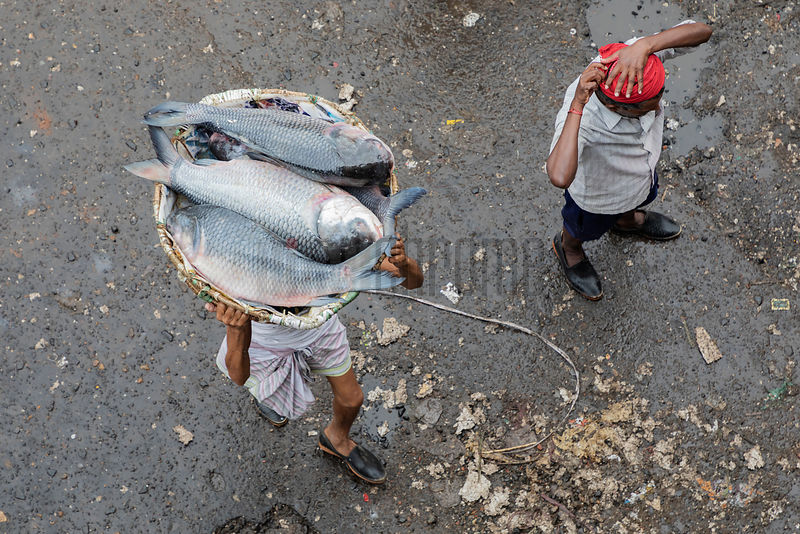 Porter Carrying a Basket of Fish at the Howrah Fish Market