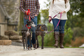 couple walking greyhounds