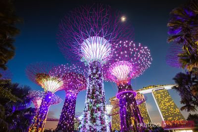 Supertrees at night, Gardens by the Bay, Singapore