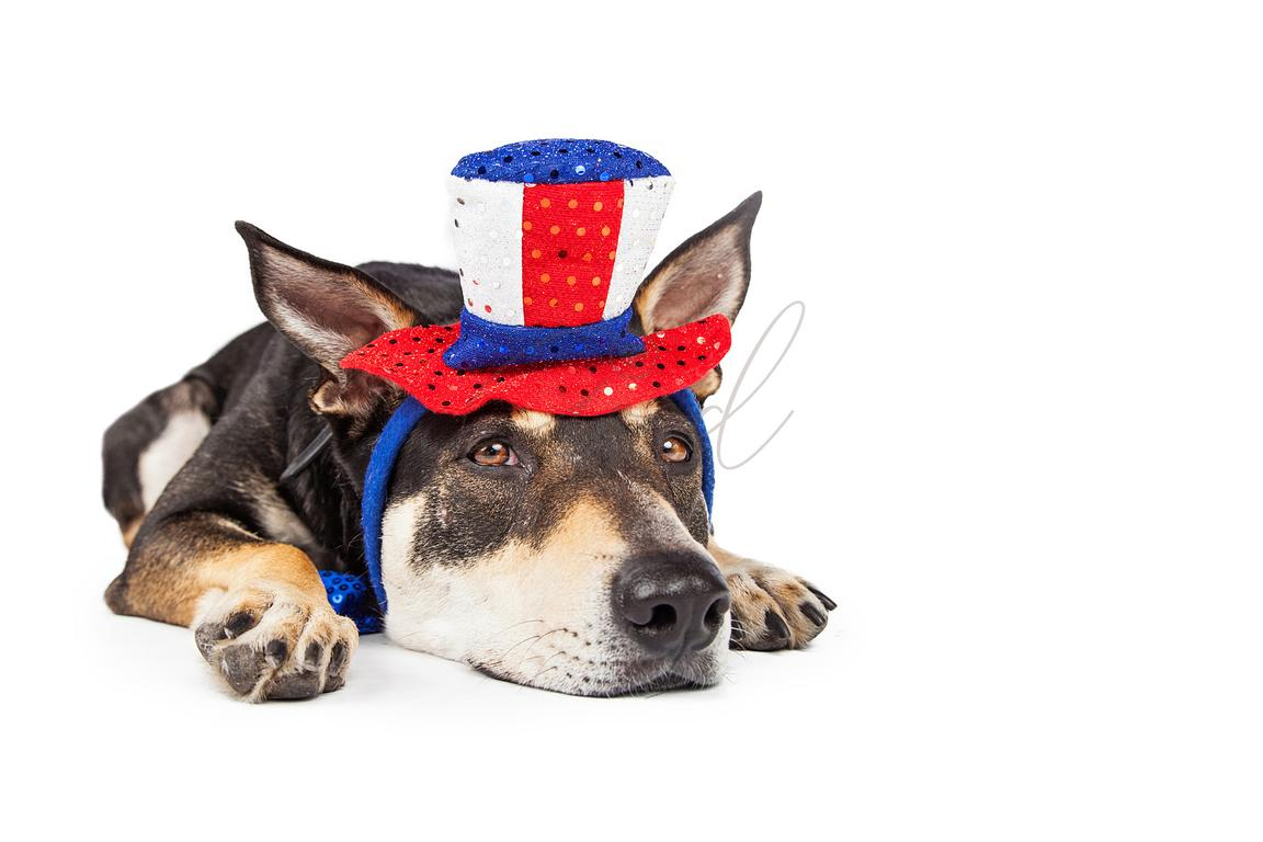 Bored and Tired Patriotic Dog