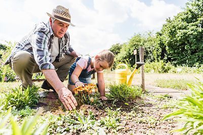 Grandfather and granddaughter in the garden examining flowers