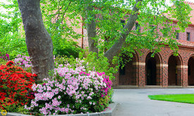 Azaleas at Chico State #6