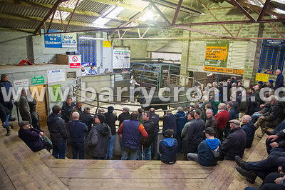 27th October, 2015.A member of staff in the ring makes a phonemail during the auction pictured at Ballyjamesduff Mart, County...