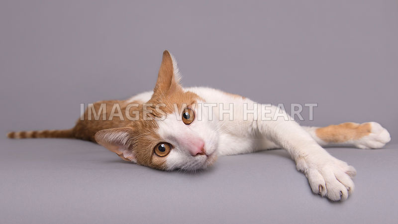 Cat laying on side looking at camera