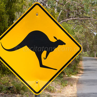 Road sign warning of Kangaroos