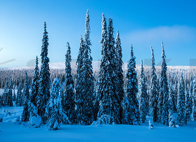 Christmas time in Eastern Lapland