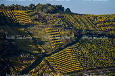 Alsace Vineyards, in autumn, France