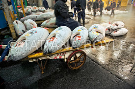 Frozen tuna on wholesale cart