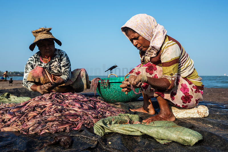 Women Preparing Freshly Caught Squid for Market