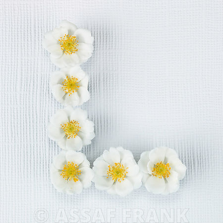 The letter L written in white Roses