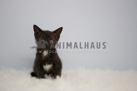 black kitten on fur