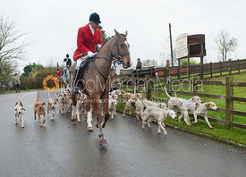 Hounds leaving the meet - The Cottesmore at John O'Gaunt 24/11/12