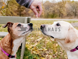 two dogs staring at a hand with a treat